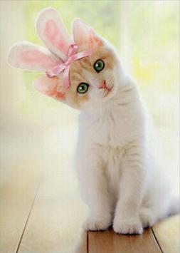 Kitten With Bunny Ears Cat Easter Card - Greeting Card by Av